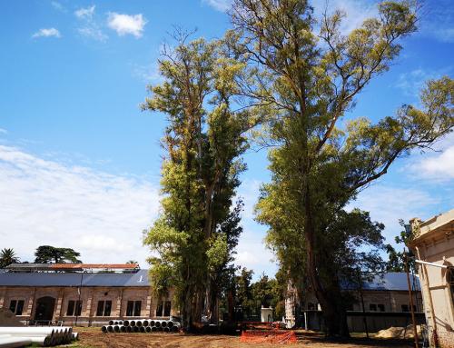Ex Sociedad Rural de Rosario. Restauración y Puesta en Valor.